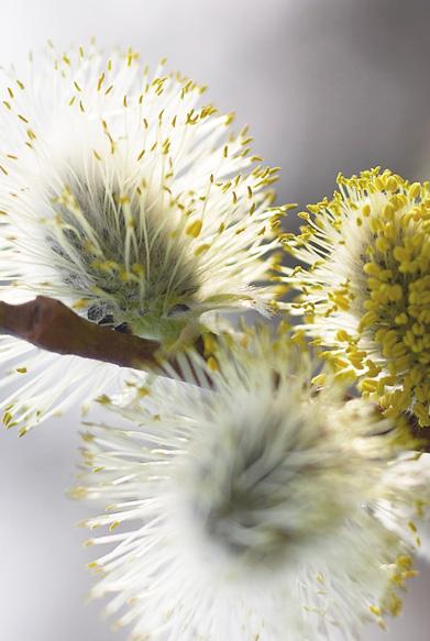 flower-ess-2