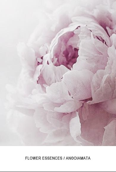 Flower-essences-new